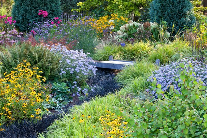 Asters: How to Grow, Care, and Design with These Fall Flowers ... on perennial garden plans zone 7, cottage gardens landscape design, perennial shade garden design, perennial garden layout design, perennial bulb garden design, perennial flower garden design plans, perennial garden plans zone 5, perennial garden plants,