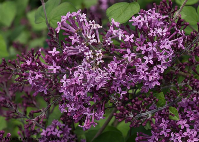 14 Best Flowering Shrubs Garden Design