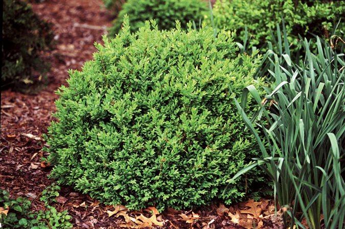 Deer Resistant Plants 20 Proof
