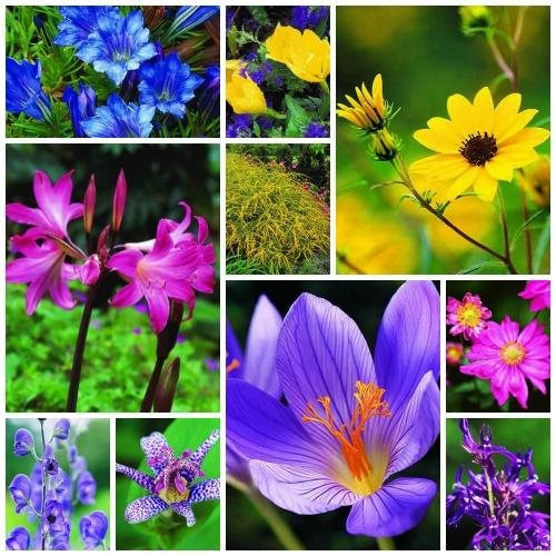10 Bulb Garden Design Ideas: 10 Fall Plants: Top Perennial Flowers & Bulbs