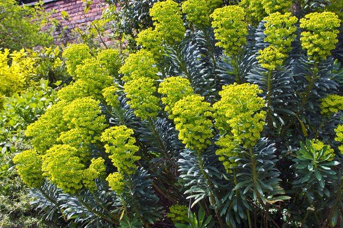 16 drought tolerant plants to grow in your garden garden design euphorbias mightylinksfo