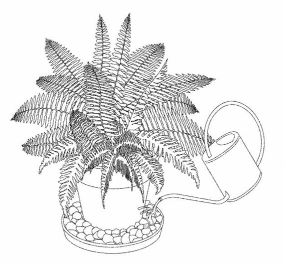 Plant Drawing Botanical Illustration Black And White