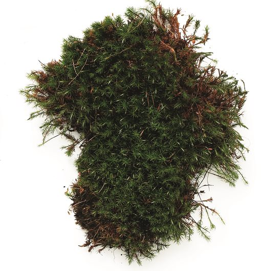 A Guide To Growing Moss In Your Garden