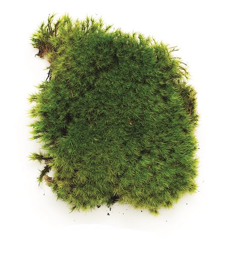 A Guide To Growing Moss In Your Garden Garden Design