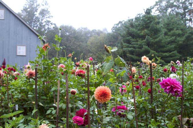 Garden Design Calimesa Ca