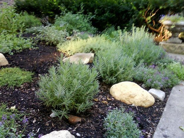 7 Mosquito Repellent Plants   Garden Design
