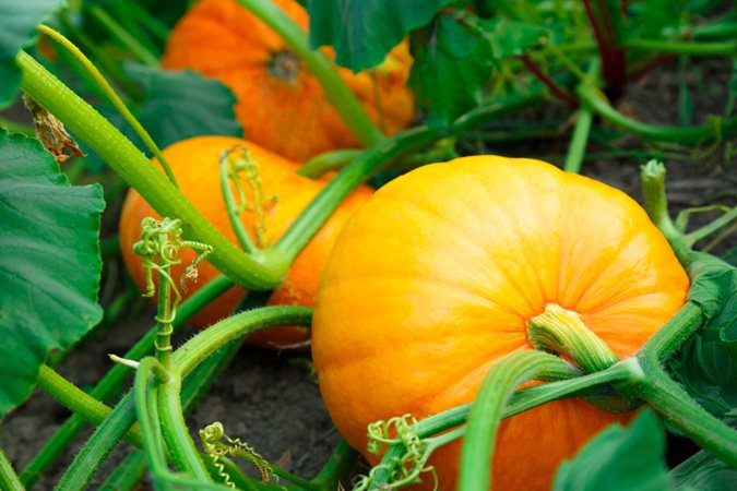 15 Fall Vegetables to Plant in Your Garden - Garden Design