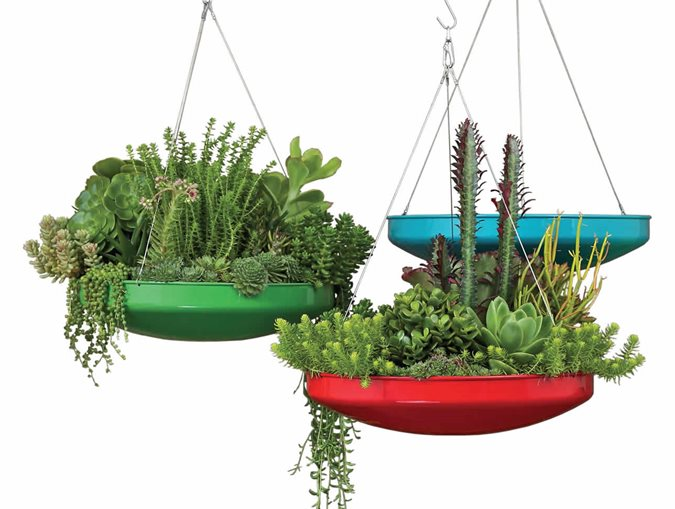 Succulent containers garden design - Dish garden containers ...