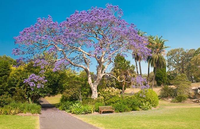 The 12 Best Flowering Trees For The Garden Garden Design
