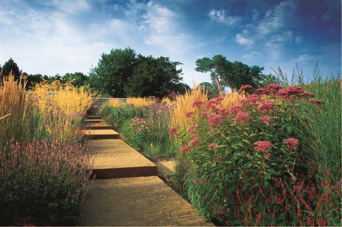 Joe Pye Weed Garden Design