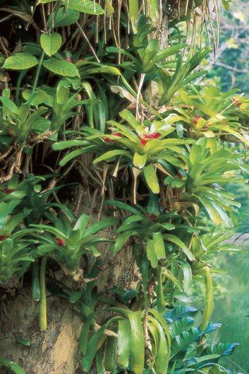 Tree Planting Ideas & Design Tips | Garden Design