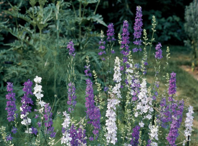 16 Drought Tolerant Plants to Grow in Your Garden | Garden