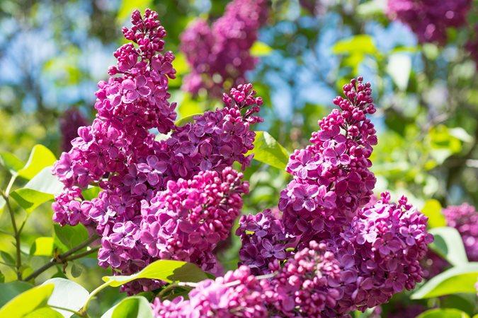 16 Drought Tolerant Plants to Grow in Your Garden | Garden