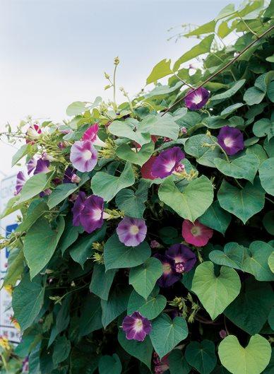 16 Drought Tolerant Plants To Grow In Your Garden