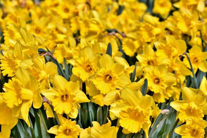 15 Spring Flowers For A Beautiful Garden Garden Design