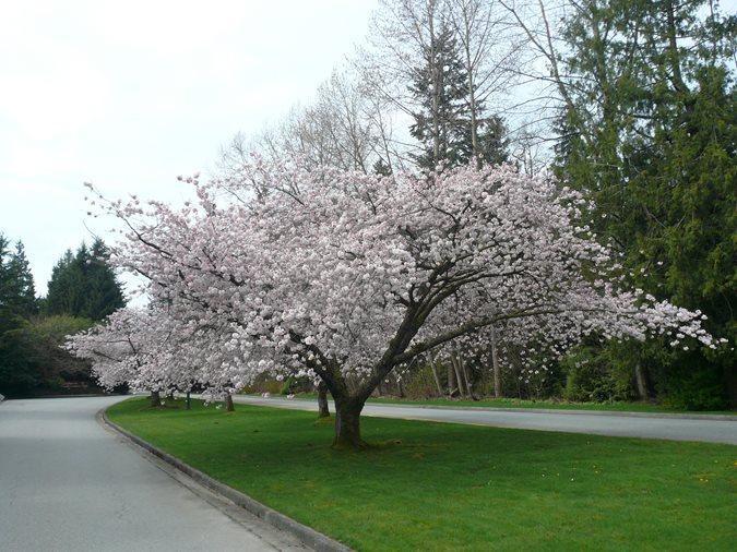 The 12 Best Flowering Trees for the Garden | Garden Design
