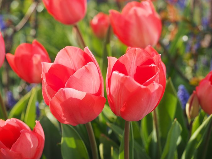18 Spring Flowers For A Beautiful Garden