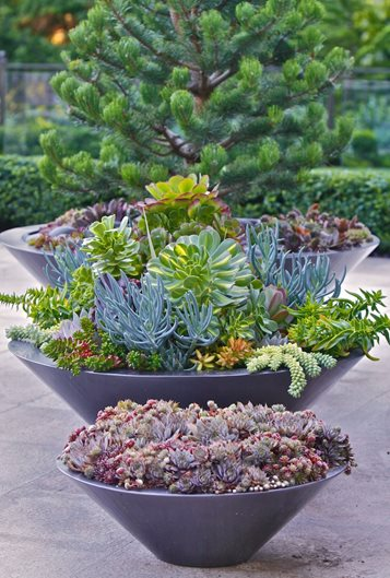 Succulent Containers For Your Garden Garden Design