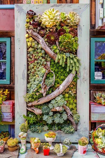 Succulent Containers Garden Design