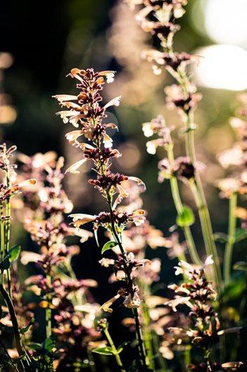 Pacific Northwest Plant Picks Garden Design