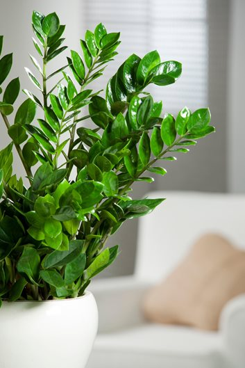 21 Best Indoor Plants Find Your Perfect Houseplant