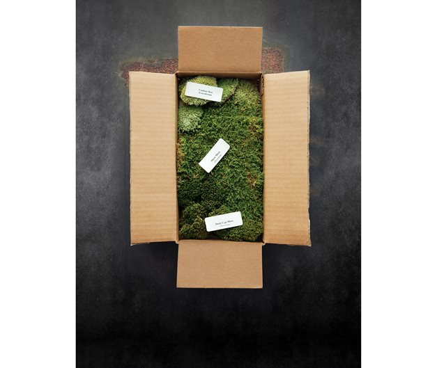 Starting a mail order plant business