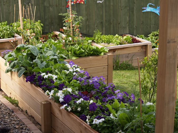 Vegetables in New Zealand - Gallery | Garden Design