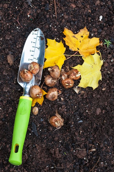 Fall Planting What And When To Plant This Autumn Garden Design