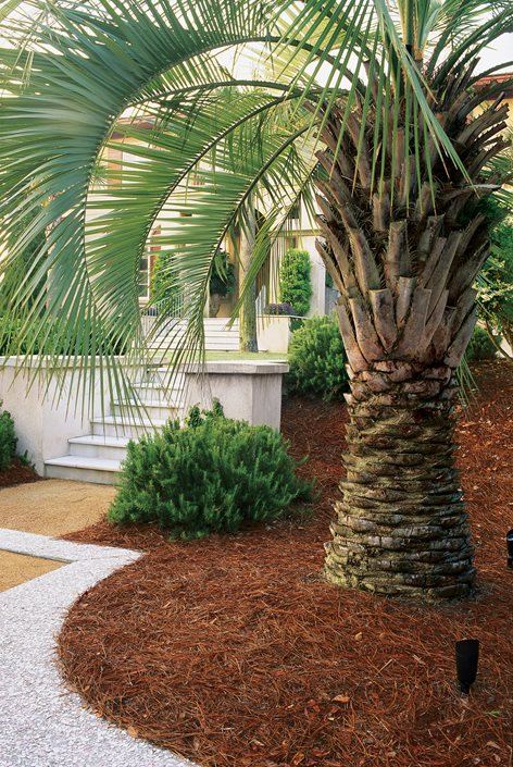 Top Uses of Palm Trees in Garden Design | Garden Design on Palm Tree Backyard Ideas id=92389