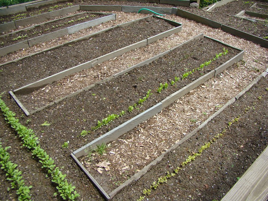 garden soil rules for preparing your soil garden design