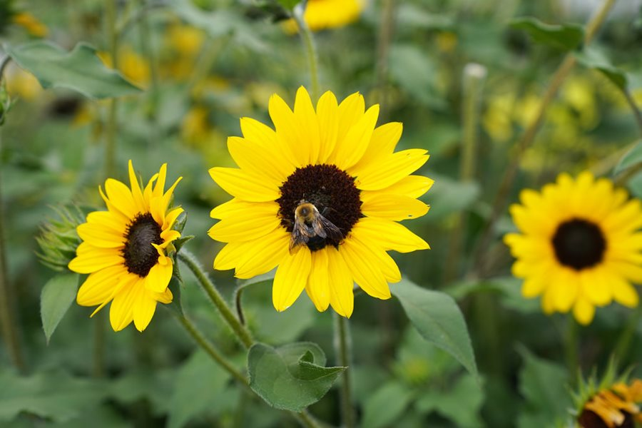 14 Flowers For Bees Fill Your Garden With Bee Friendly Plants Garden Design