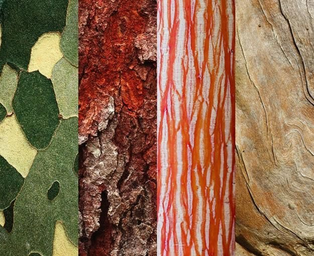 Tree Bark Offers Color, Texture and Pattern | Garden Design Zone Shade Garden Design Texture Html on