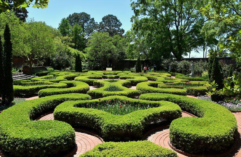 Clipped Boxwood, Boxwood Garden Shutterstock.com New York, NY