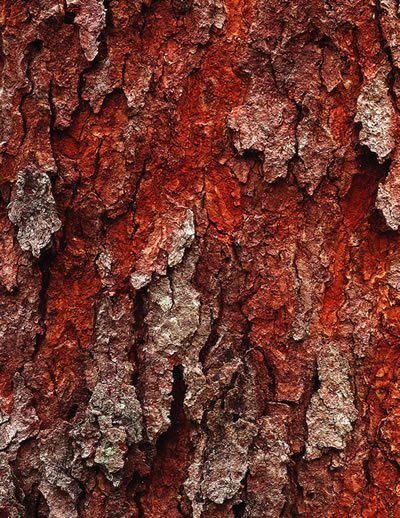 Tree Bark Offers Color Texture And Pattern Garden Design