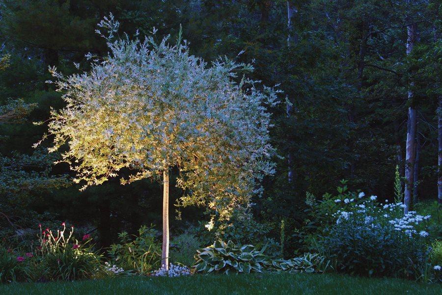 Night Garden Plants And Lighting Garden Design