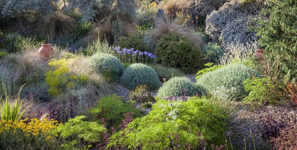 Mounded Shrubs In Garden, Summer Light Garden Design Calimesa, CA