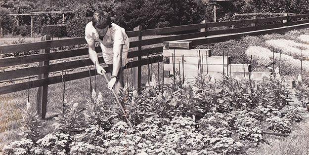 Garden Mulch How To Garden Design