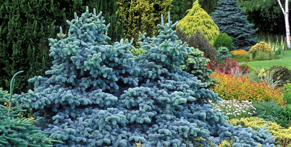 What s in the magazine garden design for Garden design winter 2018