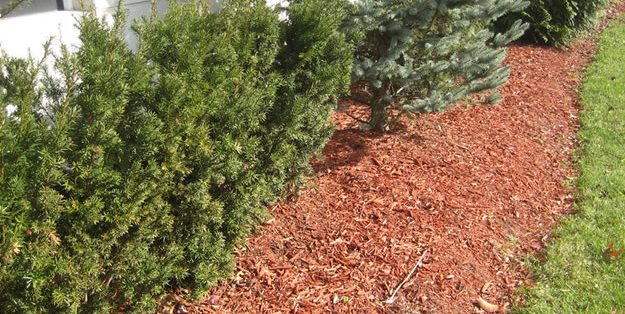 garden mulch how to