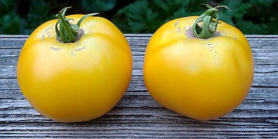 How to grow tomatoes 10 tips garden design Tomato garden design