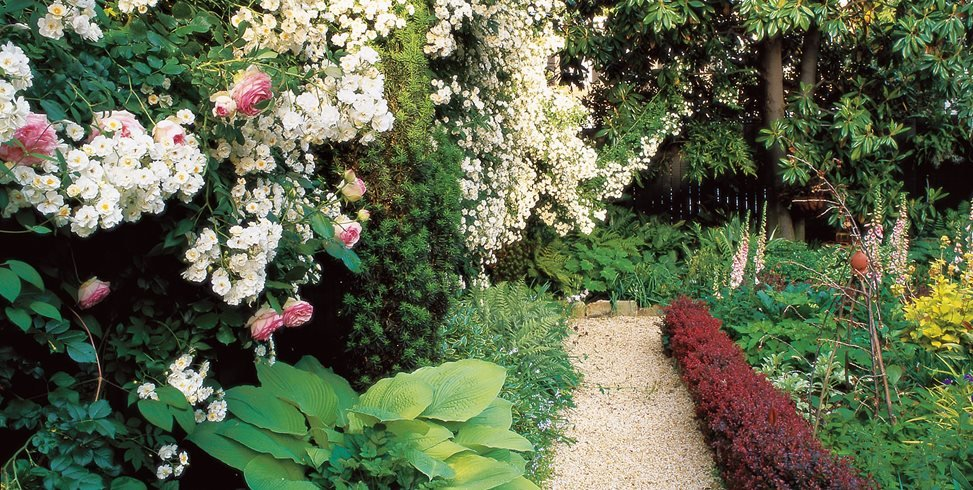 small backyard white roses barberry hedge william morrow garden design washington dc - Small Backyard Garden