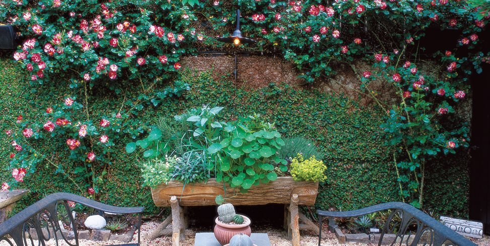 Transform a Small Garden in 7 Simple Steps Garden Design