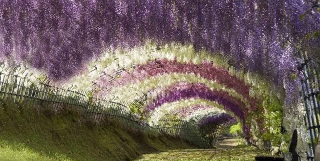 Wisteria Tunnel  Garden Design Calimesa, CA