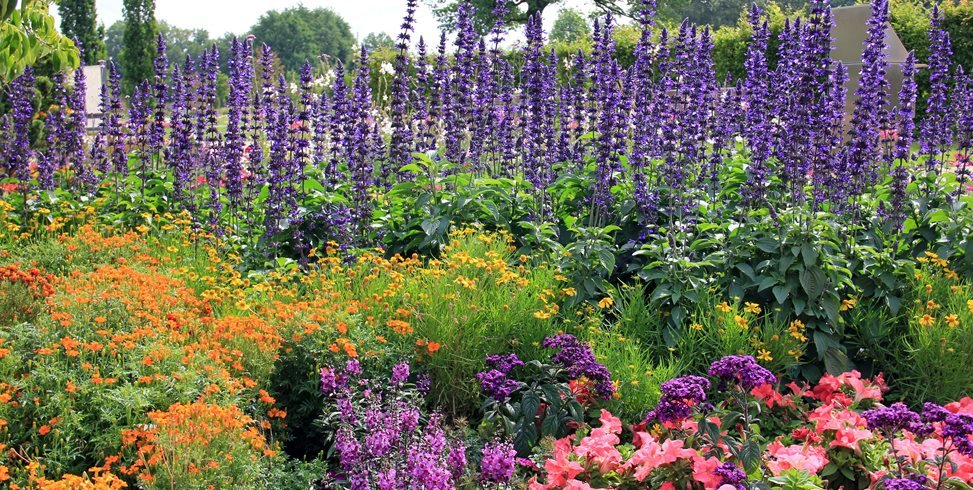 Flowers Garden Purple Spires Design Calimesa Ca