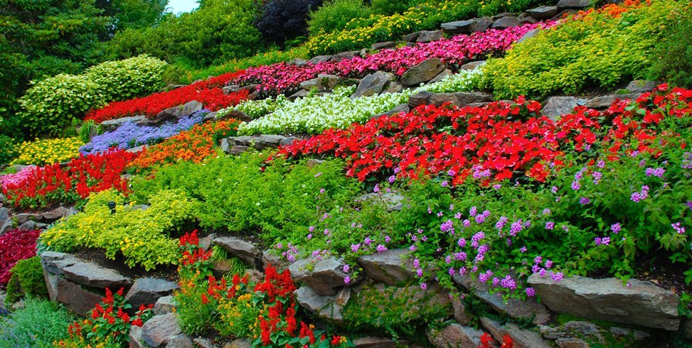 colorful flowers, terraced hillside garden design calimesa, ca