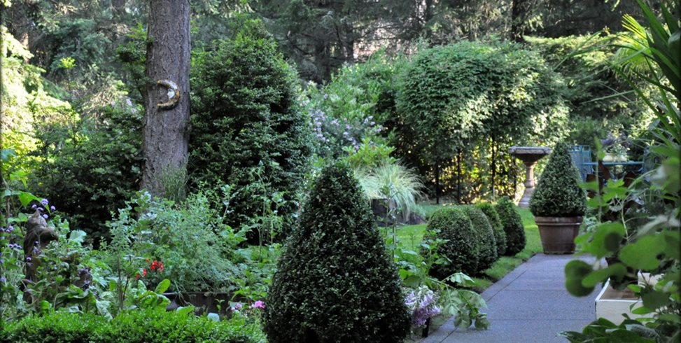 Clipped Boxwood, First Garden Design Calimesa, CA
