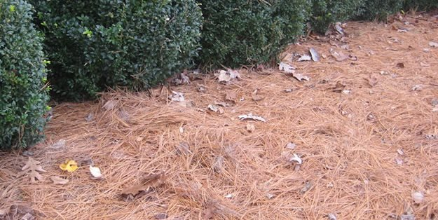 Pine Needle Mulch Garden Design Calimesa Ca