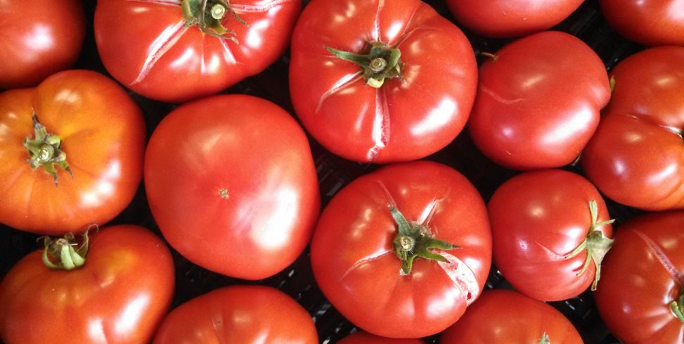 How To Grow Tomatoes 10 Tips Garden Design