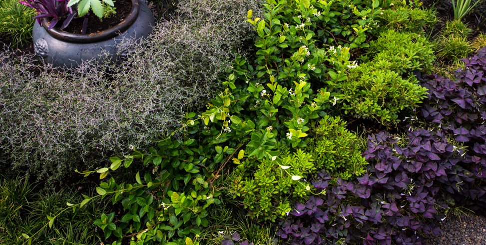 Layered Hedges, Matte Black Pot Lillyvilla Gardens Portland, OR
