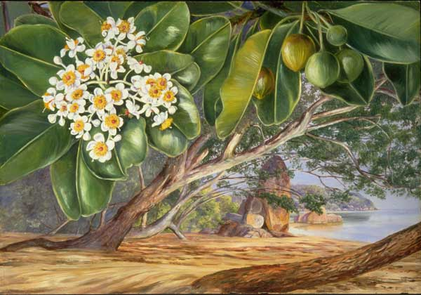 Foliage, Flowers, and Fruit at the Takamaka, Praslin